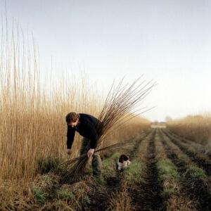 Выращивание агрикультур