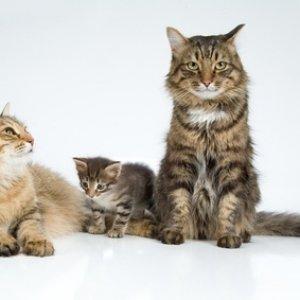 Партнер для кошки
