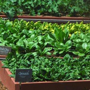 Бизнес на зелени: личный опыт и дельные советы по организации теплиц
