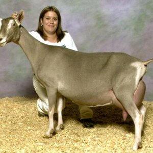 Кто ухаживает за козами