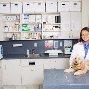 Как открыть ветеринарную клинику с нуля: рекомендации