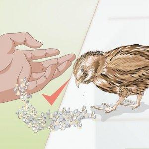 Корм для птицы