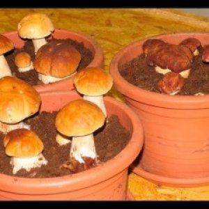 Домашнее выращивание