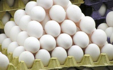 Разведение яиц