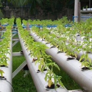 Как подобрать оборудование для гидропонного выращивания овощей