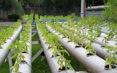 Гидропонное выращивание