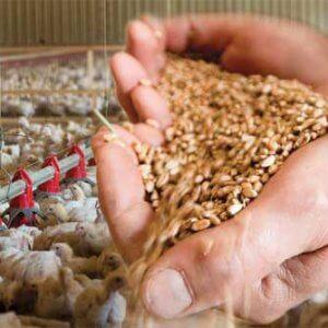 Сырье для животноводства