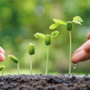 Компании по растениеводству