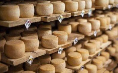 Выгоден ли бизнес на сыроварне