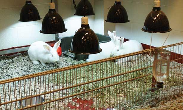 Обогрев кроликов