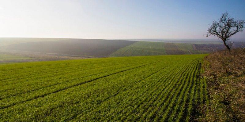 Особые моменты договора субаренды земельного участка сельскохозяйственного назначения
