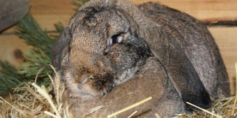 Разведение кроликов по методу Михайлова — условия содержания при использовании метода и отзывы