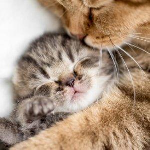 Разведение кошек как бизнес: преимущества и недостатки, правила ухода, способы получения прибыли