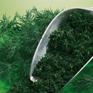 Изображение - Выращивание укропа и петрушки как бизнес magic-of-spices-dill-himself-breed-300x300