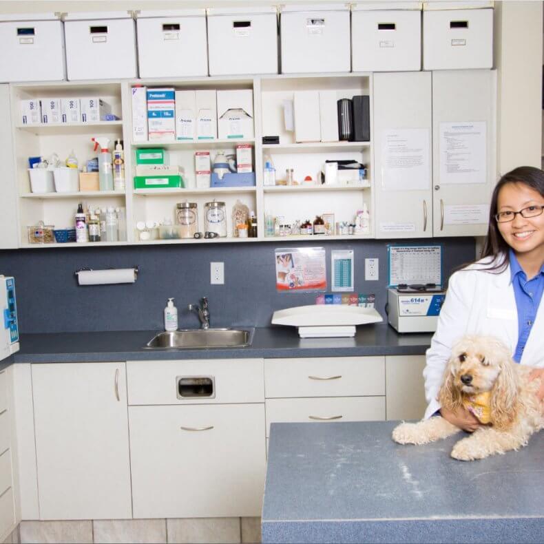 Как открыть ветеринарную клинику: бизнес-идея, как открыть, вложения, оборудование, что нужно для открытия   реальные кейсы