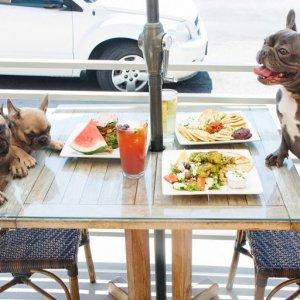 Бизнес-план кафе для собак: создание успешного дела
