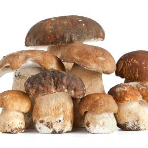 Успешный бизнес: выращивание белых грибов в теплице