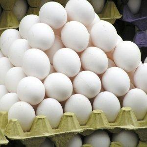 Продажа куриных яиц как бизнес на домашних несушках