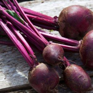Выращивание свеклы в открытом грунте: как организовать рентабельный бизнес