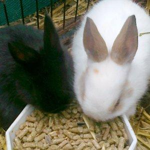 Подкормка кроликов