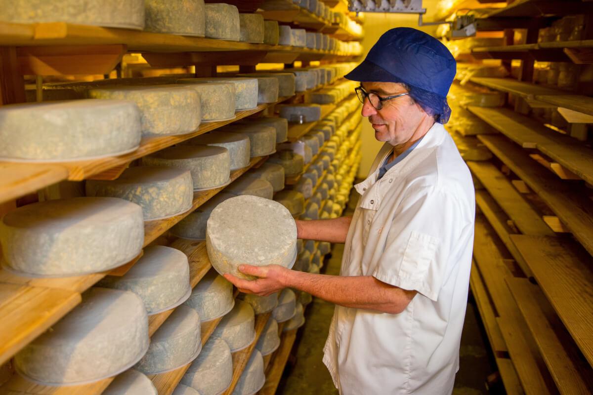 Созревание головок сыра