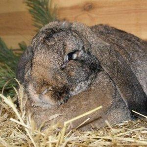 Разведение кроликов по методу Михайлова - условия содержания при использовании метода и отзывы