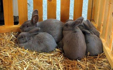 Оборудование для кроликов