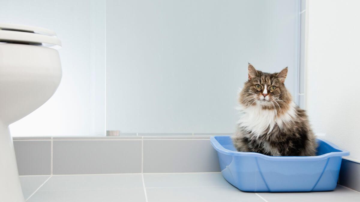 Экологические кошачьи туалеты