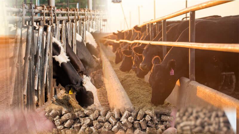 Изготовление корма для крупного-рогатого скота