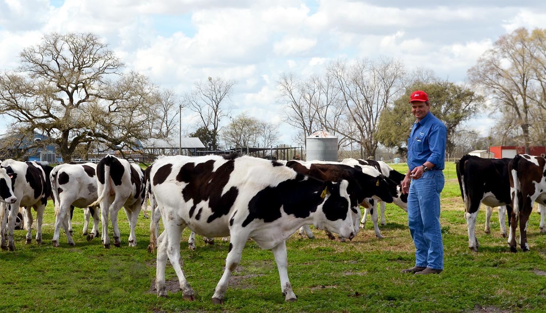 Сотрудник по уходу за коровами