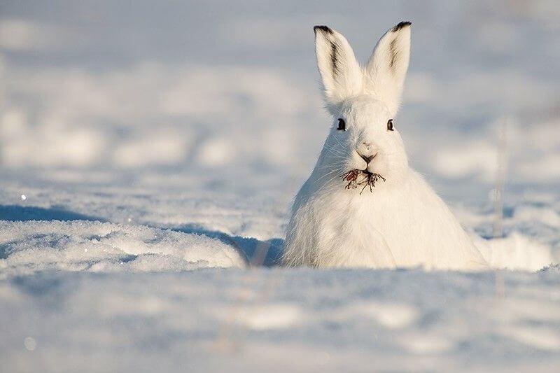 Кролики в Сибири