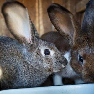 Кролиководство в России - как открыть прибыльный бизнес
