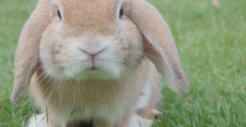 Кролики в России