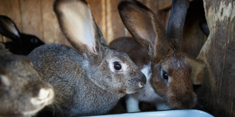 Кролиководство в России – как открыть прибыльный бизнес